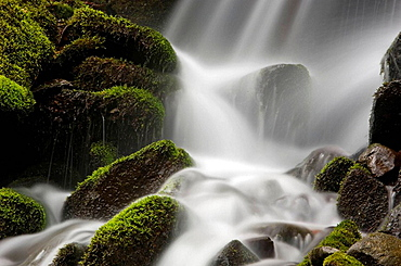 Mossy cascade in tributary of Middle Prong of Little River, Great Smoky Mountains National Park, Tennessee, Appalachian, USA