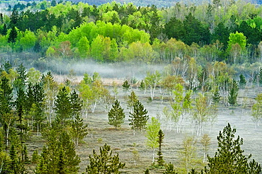 Spring forests on hillsides with morning mists in valley wetlands