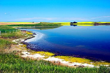 Colorful Saskatchewan Canadian prairie scenes of lakes, blooming canola fields and grasslands east of Saskatoon, Canada