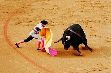 Bullfighting at the Maestranza bullring, Seville, Spain