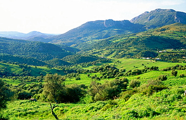Sierra de Grazalema natural park, Cadiz province, Andalusia, Spain