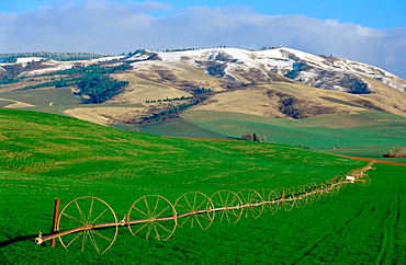 Sprinkler system in wheat field on the outskirts of Walla Walla, a small historic town in SE Washington, Blue Mountains in background (the Blue Mountains are a range that stretches from SE Washington on into NE Oregon)