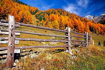 Solda (Sulden), Stelvio National Park, Trentino-Alto Adige, Italy