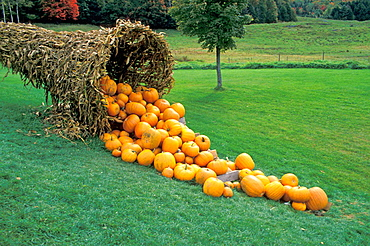 Horn of Plenty, Pumpkins, Vermont, USA