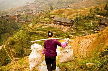 Rice terraces in Longji, Guangxi, China