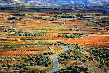 La Rioja, vinedos en otono autumn vineyards, Rioja wine region, Spain