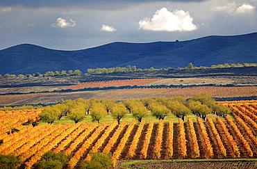 Rioja wine landscape, Rioja wine regionPaisaje del vino en otono, La Rioja