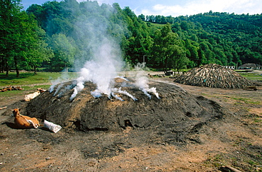Coalyard, Charcoal production, Transylvania, Romania.