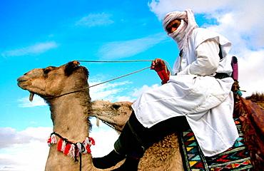 Tunisian nomad on mehari, Sahara's Festival, Douz, Tunisia - 817-15916