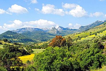 National Park near village of Grazalema, Cadiz, Andalucia, Spain