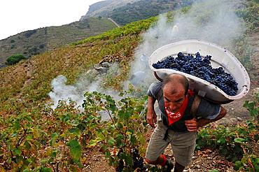 Vignoble de Banyuls - wine-region - south of france - Banyuls sur mer -