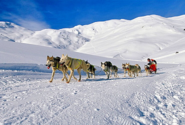 Sled dogs, Baqueira, Valla d'Aran, Pyrenees Mountains, Lleida province, Catalonia, Spain..