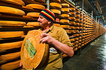 Fontina cheeses (traditional cow's milk Italian cheese made in Aosta Valley), Aosta Valley, Italy
