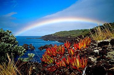 Ponta do Varadouro, Faial , Azores Island, Portugal