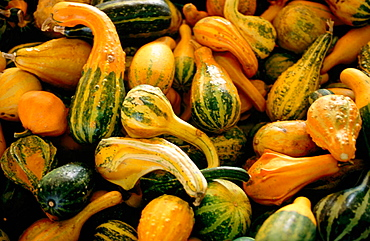 Acorn squash at a roadside produce stand, Sussex County, Delaware, USA