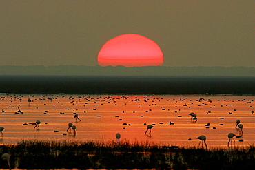 Evening in Donana National Park, Huelva province, Andalusia, Spain
