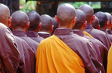 The back of monks shaved heads, as they go through a group prayer ritual, Kongobuji, Koyassan, Japan