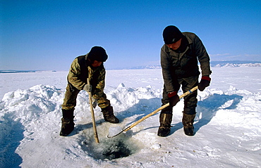 Fishermen digging ice hole on frozen Baikal lake in winter to recover their net, Siberia, Russia
