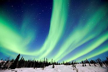 Northern lights (Aurora borealis) Northwest territories, March 2008, Canada