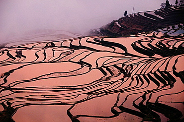sunrise at the spectacular water filled rice terraces of Yuanyang in Yunnan China
