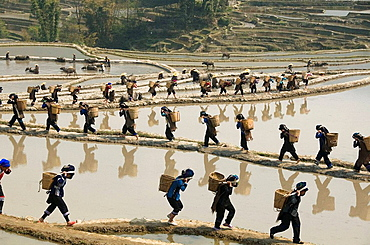 Hani Akha women with their rice baskets in Yuanyang China