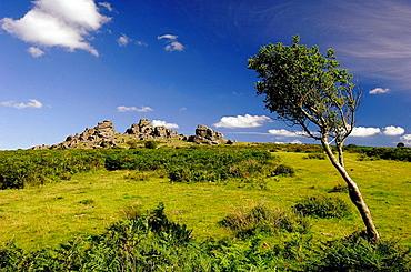 Hound Tor, Dartmoor, Devon, England, UK