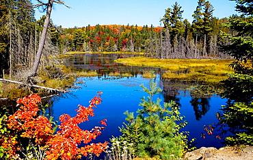 Algonquin Park in Fall, Ontario, Canada