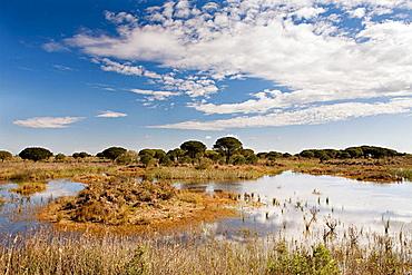 Laguna del Acebuche in the Donana National Park, Huelva province, Andalusia, Spain
