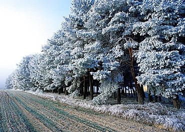 Linea de bosque helada