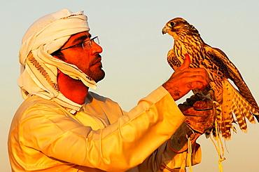 Hunting falcon perched on the hand of the falconer, Falcon training in Dubai, United Arab Emirates, UAE
