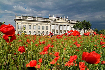Poppy Field, art installation for the documenta XII, 2007, Field of Papaver rhoeas and Papaver somniferum infront of the museum Fridericianum, 6590 square meter, loud speakers, revolutionary songs, performed vy LeZbor, Kassel, Hesse, Germany