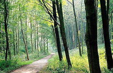 Haagse Bos Park, The Hague, Holland