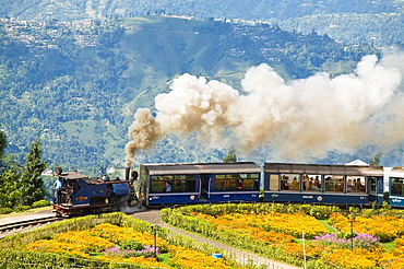 India, West Bengal, Darjeeling,  Batasia Loop, Steam train known as the Toy Train of the  Darjeeling Himalayan Railway  listed as a World Heritage Site,