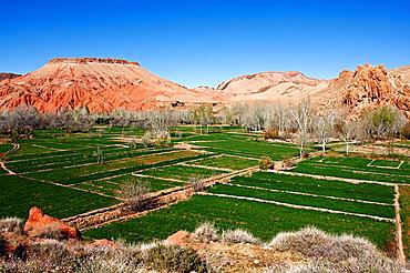 Boumalne Dades, Dades Valley, Morocco, Africa
