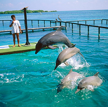 Dolphins in San Martin de Pajarales aquarium, Rosario Islands, Cartagena de Indias, Colombia