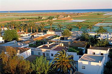 Rice fields, Poble Nou del Delta, Ebro Delta, Montsia, Tarragona province, Catalonia, Spain