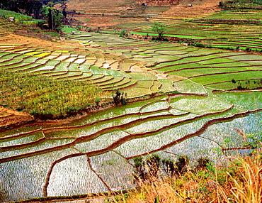 Terraced ricefields, Sri Lanka
