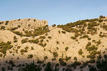 Oaks rooted in rock, Quercus Ilex, Serra Son Torrella, Soller, Sierra de Tramuntana, Mallorca, Balearic Islands Spain