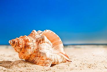 A beautiful sea shell on the beach