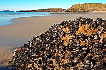 Paxarinas beach Sanxenxo, Pontevedra, Galicia, Spain