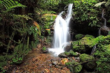 Bwindi Impenetrable National Park, Uganda, Africa