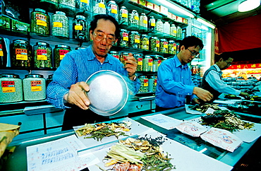 Traditional Herbalists working in their shop, Wanchai, Hong Kong, China