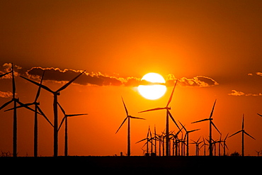 Wind turbines generating electrical power at Horse Hollow Wind Farm, Nolan county, Texas the worlds largest wind power project during sunset