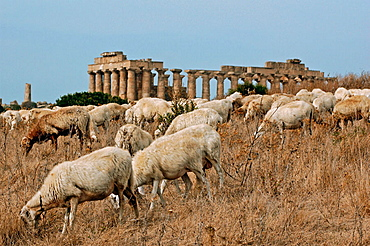 Temple E, The City of Selinonte was founded by the greek from Megare in VII th century AD, Sicily, Italy