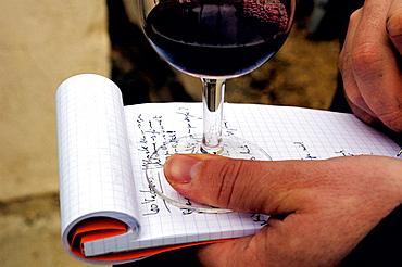 Wine tasting in Maison de la Truffe et du Vin du Luberon, Menerbes, Luberon region, Vaucluse, Provence, France