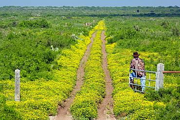 Ranch Road Landscape, Los Novios Ranch, near Cotulla, Texas USA