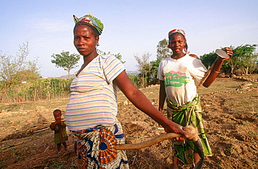 Pregnant women doing hard field work, Rumsiki, North province, Cameroon