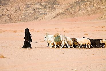 Bedouin woman returning with her sheep, Wadi Rum desert, Kingdom of Jordan