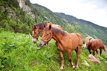 Horses in Banhs de Tredos, Val dAran, Lleida, Spain
