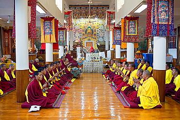 Puja, Monks praying, in Namgyal Monastery, in Tsuglagkhang complex McLeod Ganj, Dharamsala, Himachal Pradesh state, India, Asia